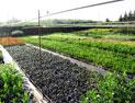 Produzione vendita e piantumazione di piante ornamentali for Vendita piante di lamponi
